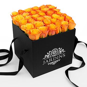 Orange_Roses